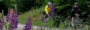 Lupine Junefest Bike Tour @ Carow Park