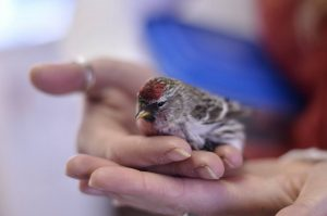 Winter Bird Banding Demonstration @ Discovery Center