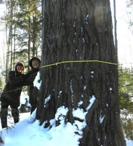 Snowshoe Hike to Old-Growth Pines @ Mercer Library