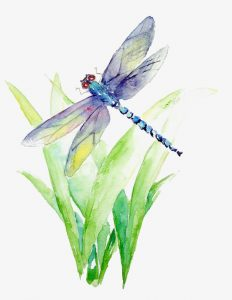 Knowledge at Noon: Discovering Dragonflies @ Boulder Junction Library