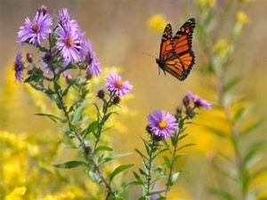 Iron County 2019 Native Plant Sale