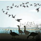 Migration Day @ North Lakeland Discovery Center