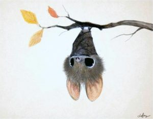 Building a Better World for Bats @ North Lakeland Discovery Center
