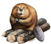Conservation on Tap: Beaver Ecology @ The Pines Restaurant