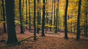 Private Forest Management with Chris Paulik @ Mercer Library