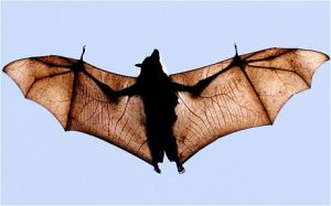 Bats of the Northwoods – a Summer Reading Program