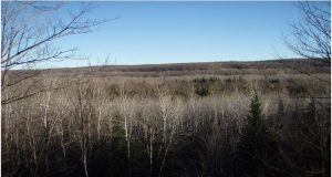 National Trails Day Hike @ North Country Trail, Heritage Chapter in Iron County