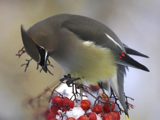 box-birding-02